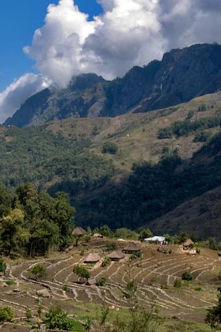 Coffee Plantation, East Timor